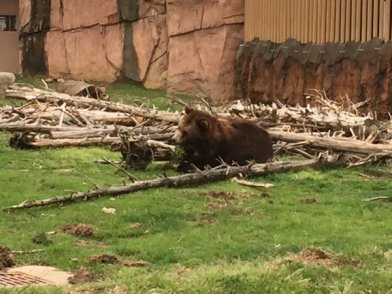 17 zoo - bear